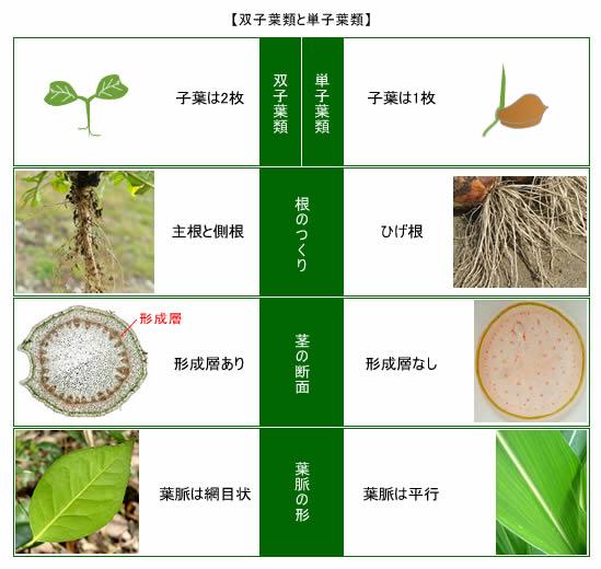 植物の分類|【植物】の達人 : 中学1 数学 : 中学