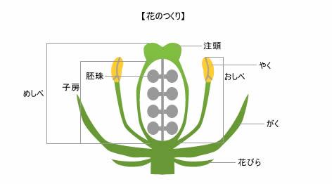 花のつくりとはたらき|【植物 ...